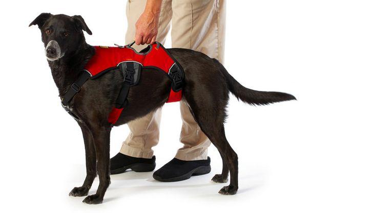 Halsband-of-Harnas-kopen-voor-je-hond