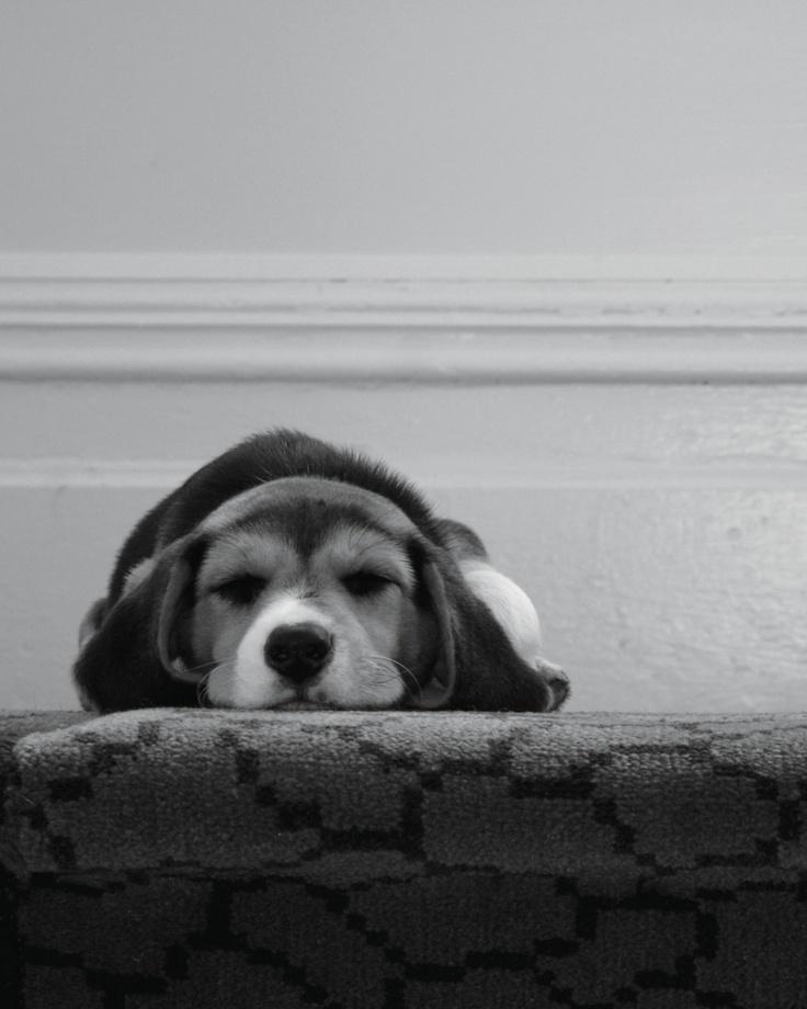 Snoopy at 10 weeks. Taken by Natalie Winter in Ponsonby, New Zealand