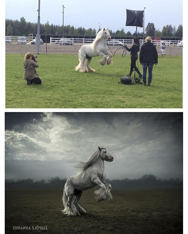 Making of photo and result. I take photos and Boss posing for me and audience at the fair. #photographydemo #hevoskuvausdemo #satakunnanmaaseutunäyttely #equine #equinephotographer #equestrian #equinephotography #equineart #horse #horsephoto #horsephotographer #horsephotography #horsepic #hevonen #hevosvalokuvaus #hevoskuva #hevosvalokuvaaja #theblueboss #johannasjovall #boeunder3k