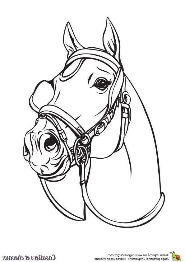 14 Creatif Coloriage Cheval Dressage Images Coloriage Cheval