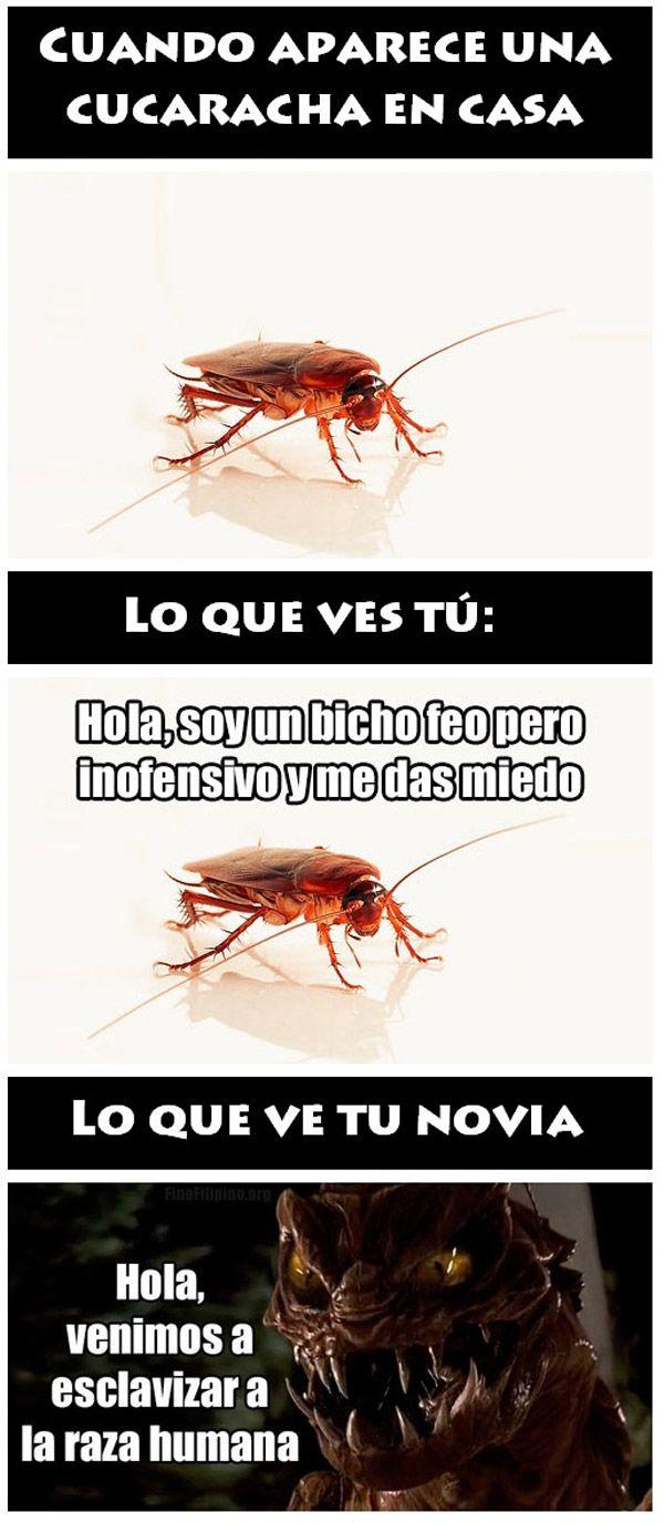 Cucarachas en casAaaa