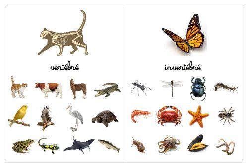 Pour ce fichier j'ai volontairement choisi les photos des 5 classes d'animaux correspondant aux puzzles montessori que l'on trouve su...