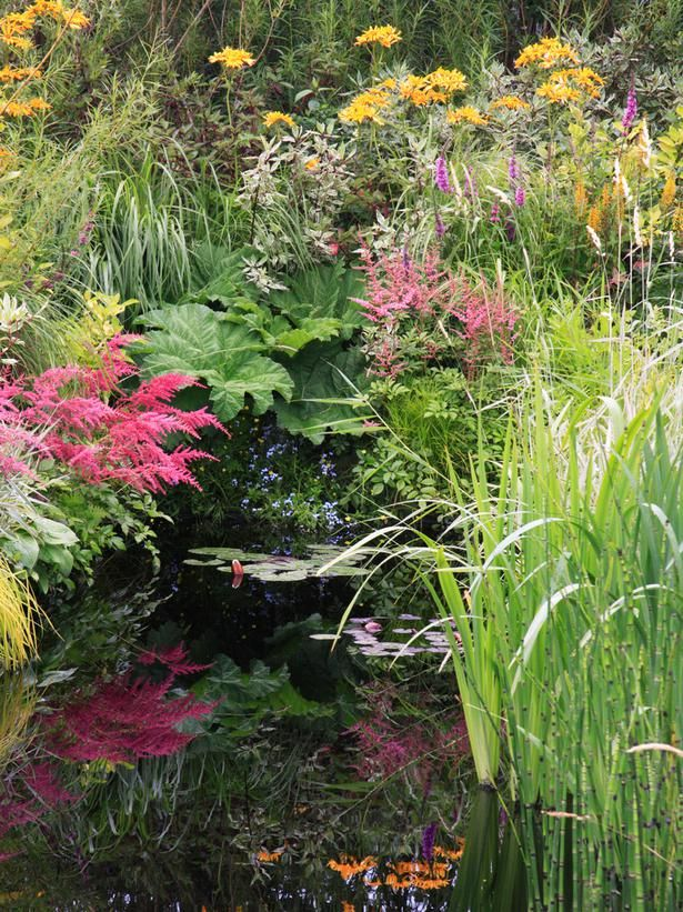 32 best plants for boggy gardens images on pinterest bog for Easy pond plants