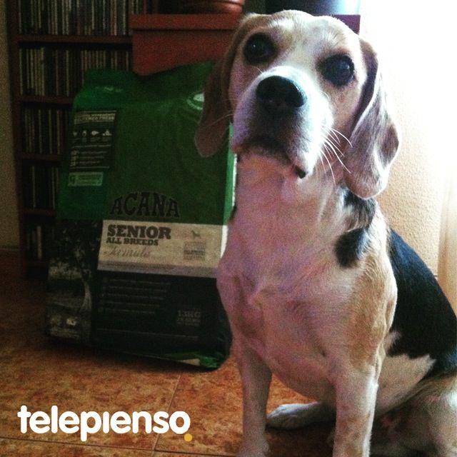 Acana Senior Dog