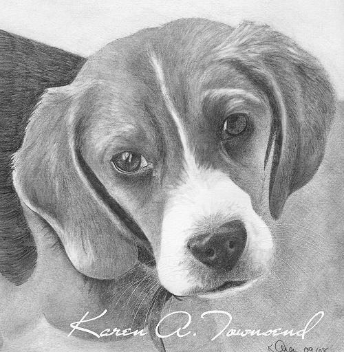 beagle wm.jpg (500×512)