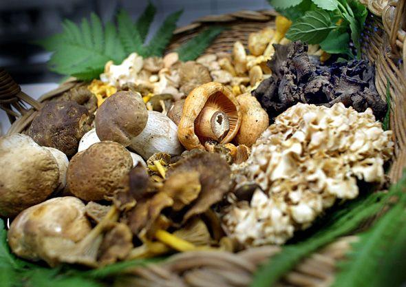 Tunnistatko sienet? Testaa Ruoka.fin kuvavisassa sienitietämyksesi.