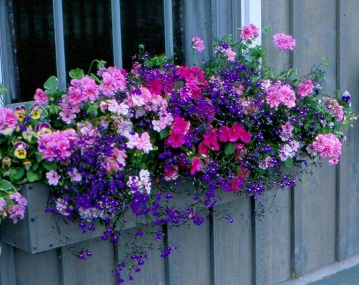 Gorgeous windowbox – #Bacafleurspourl'ete #Havredepaixjardin #Jardinierdébutant…
