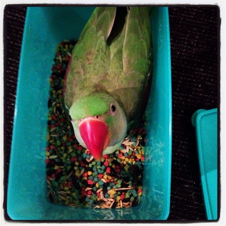 Billy raiding the food tub!