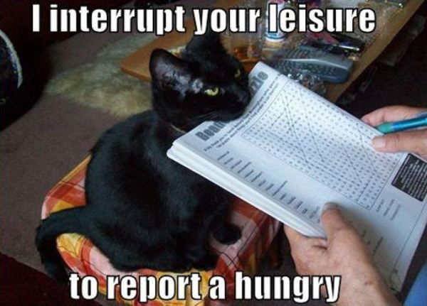 Funny pictures of the day (43 pics)