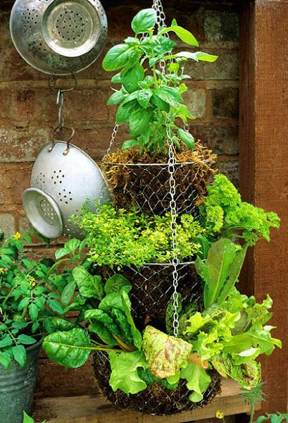 Hanging Herb Garden Ideas best 25+ diy herb garden ideas on pinterest | indoor herbs, herb
