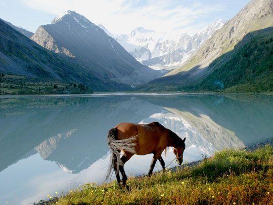 Горы Алтай фото, картинки, видео