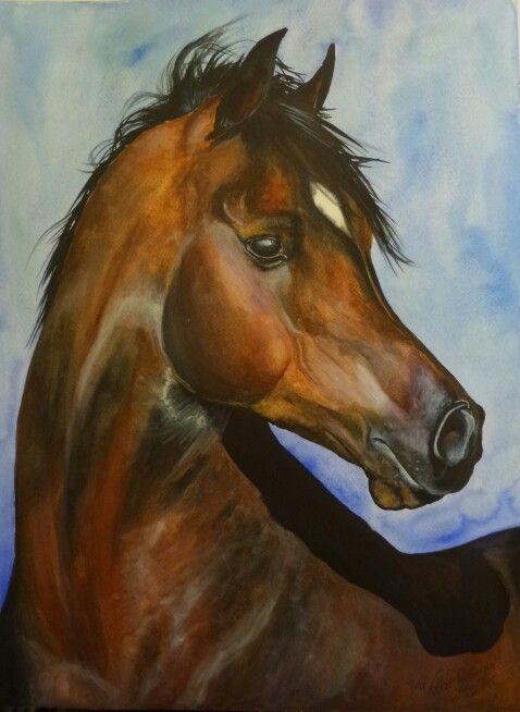 Arab ló akvarell