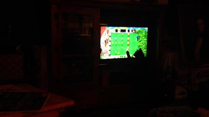 """Cat playing """"Plants vs. Zombies"""""""