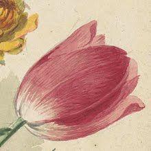 tulp-Collected works of Marlene - All Rijksstudio's - Rijksstudio - Rijksmuseum