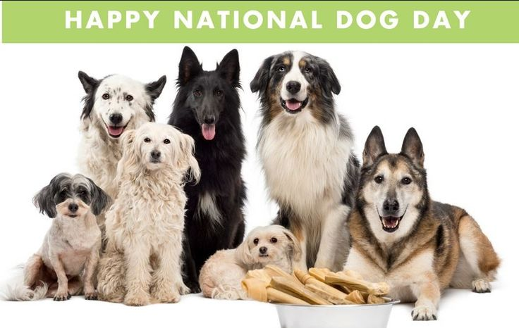 Happy National Dog Day To All... http://ift.tt/2xo9F9z