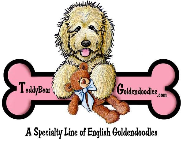 The Original English Goldendoodle | Teddybear Goldendoodles
