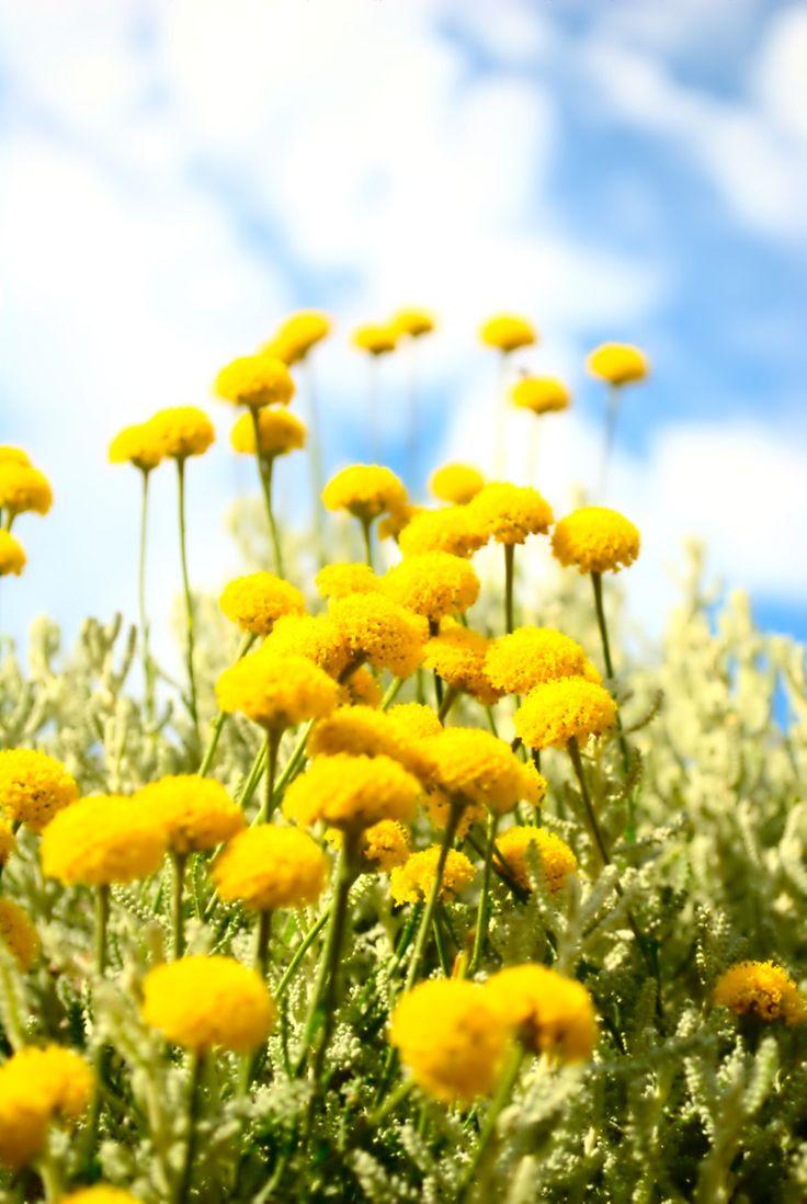 76 best color schemes lemon yellow flirt color palette images on