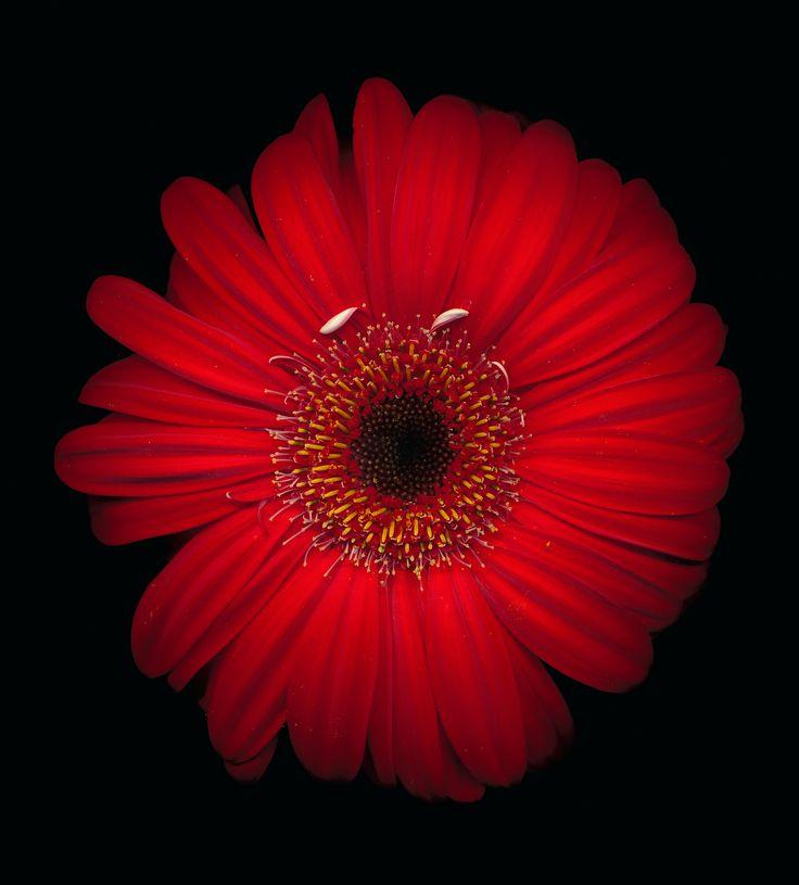 Scanned flower  | Sash Segal