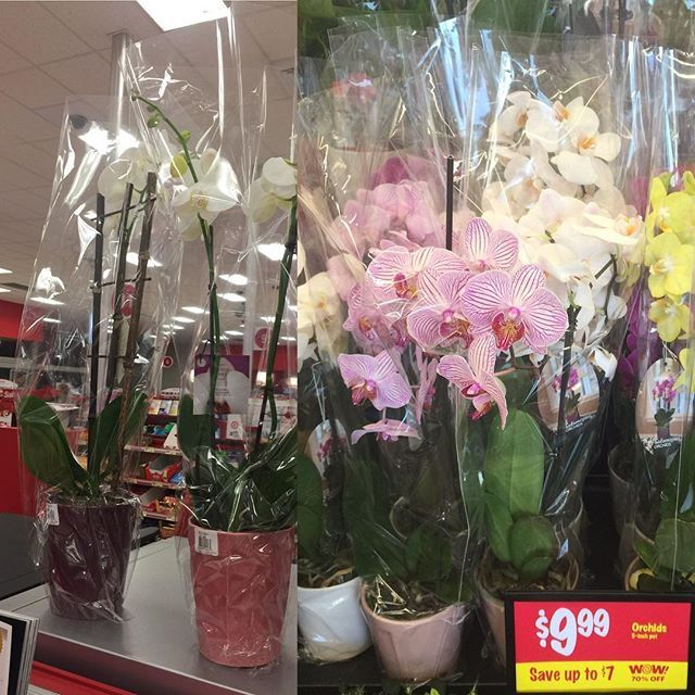 Good morning, beautiful/handsome! We wanted to get you flowers to show you how much you mean to us, but we are busy hustling to bring you name brand stuff at low prices. So...you're going to have to come get them yourself. Now. not to TARGET anyone, but the picture on the left is another store that is TARGETING your wallet by charging you $16.99 for...what you see in the picture. The lush, lovely orchids that you see on the right are ours. You decide.  Make sure you pick the right one…
