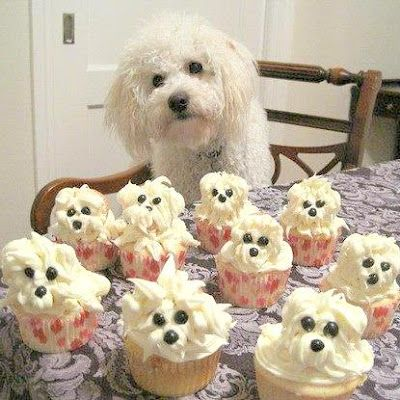 Bichon Cupcakes: Happy Birthday, Dogs Cupcakes, Birthday Parties, So Cute, Dogs Birthday, Puppies Cupcakes, Dogs Cakes, Cups Cakes, Cupcakes Rosa-Choqu