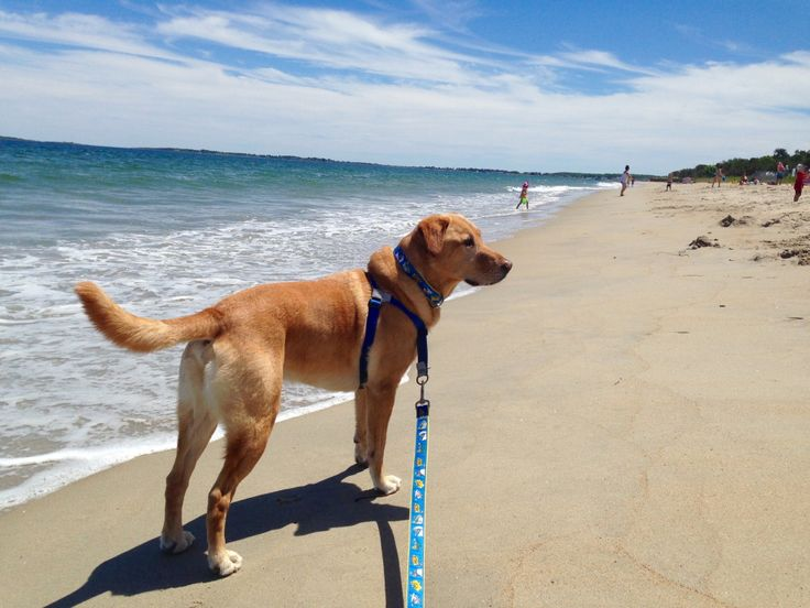 13 Dog Friendly Summer Beaches in Maine