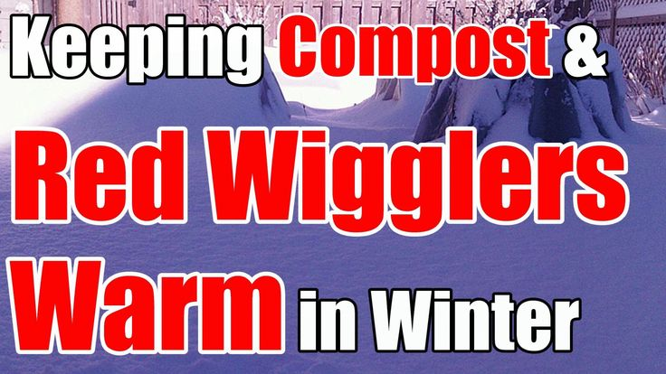 In today's 2 minute tip, I talk about how we keep compost warm enough for red wiggler composting worms to survive our cold winters here in zone 5!