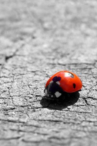 337 Best Ladybugs Images On Pinterest Butterflies Lady