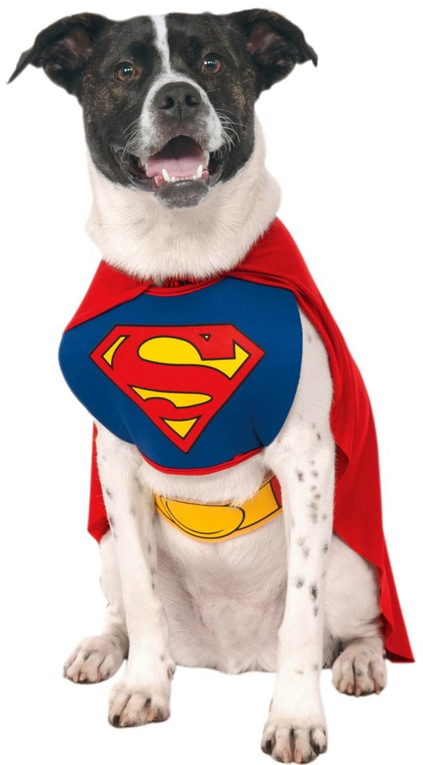 Halloween Costumes for Dogs | Costume Craze