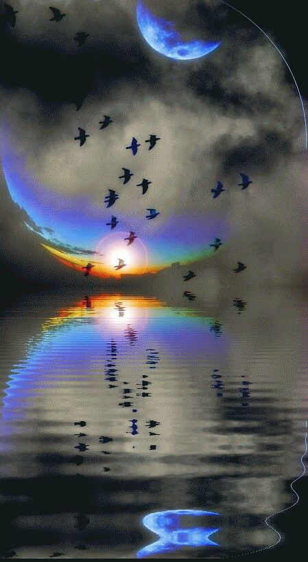 Reflection sea moon flock of birds landscape beautiful - Good night nature pic ...