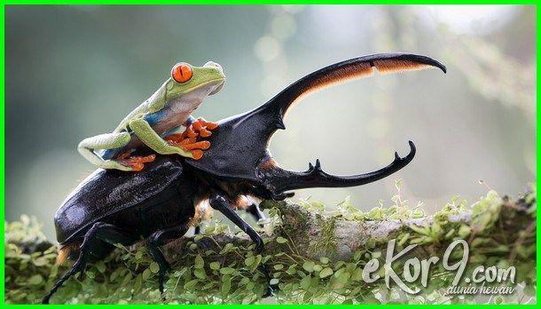 29+ Contoh hewan yang mengalami metamorfosis tidak sempurna adalah terbaru