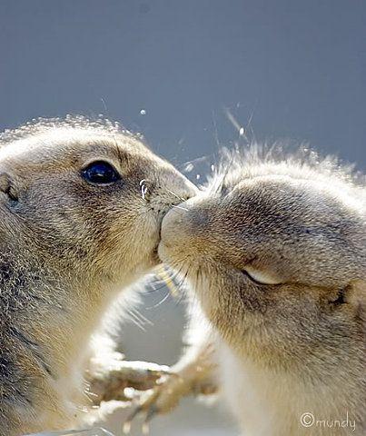 Animal kisses - Best Pics Around