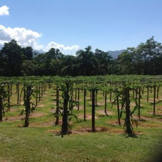 We are a passionfruit farm located less than 1 km from the beautiful Bramston Beach. Situated on 100 acres part of which is World Heritage listed rainforest.