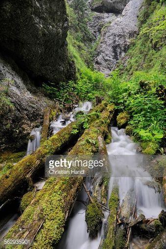 Dolne Diery ravine, Mala Fatra National Park, Slovakia, Europe... #dolnedubove: Dolne Diery ravine, Mala Fatra National Park,… #dolnedubove