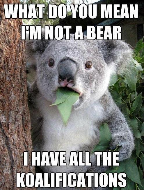 You Are not Koalified to Judge me!!!:  Phascolarcto Cinereus, Koalabear, Stuff,  Native Bears, Funny, Funnies,  Koalas Bears,  Kangaroos Bears, Animal