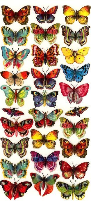 Butterfly stickers made in the USA: