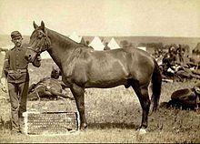Batalla de Little Bighorn - Comanche, el único caballo superviviente del destacamento de Custer.