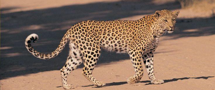 Top 10 Endangered Animals In The World - Stuffbox4u