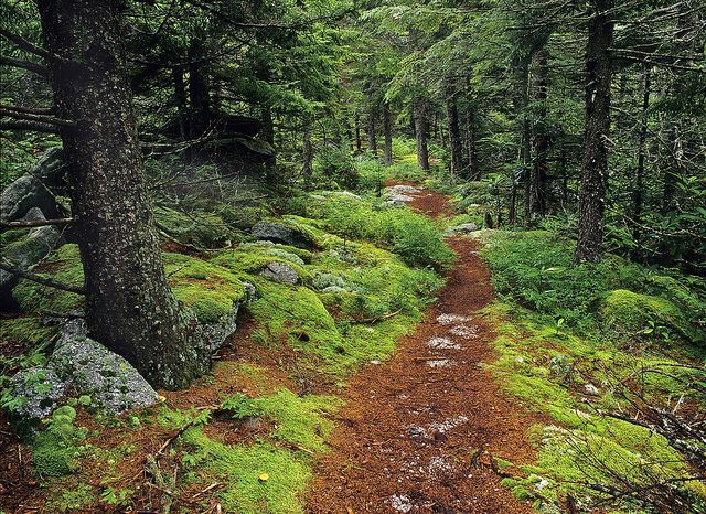The Monongahela National Forest in West Virginia