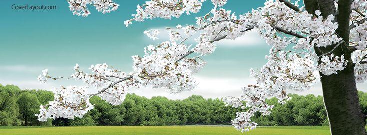 White Blossom Tree Facebook Cover CoverLayout.com