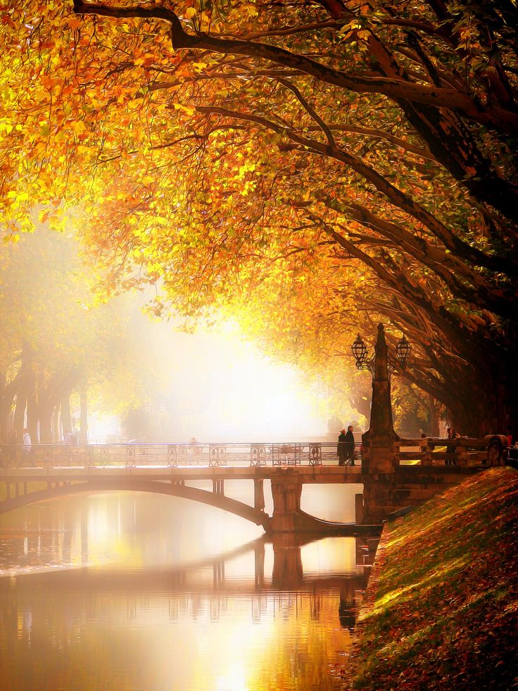 Golden Walk - Koenigsallee Dusseldorf in Autumn through which goes a canal in the middle, wich is 1 km long - Germany