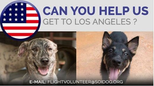 CAN YOU HELP US GET ADOPTED RAENIA AND SEPIA TO THEIR NEW HOMES?  If you are traveling FROM Thailand TO Los Angeles, on BOOKED tickets with Thai Airways, All Nippon Airways (ANA), China Airlines, Qatar, Korean Air, JAL, EVA, Lufthansa or KLM, please EMAIL flightvolunteer@soidog.org for more information.  http://www.soidog.org/en/be-a-flight-volunteer