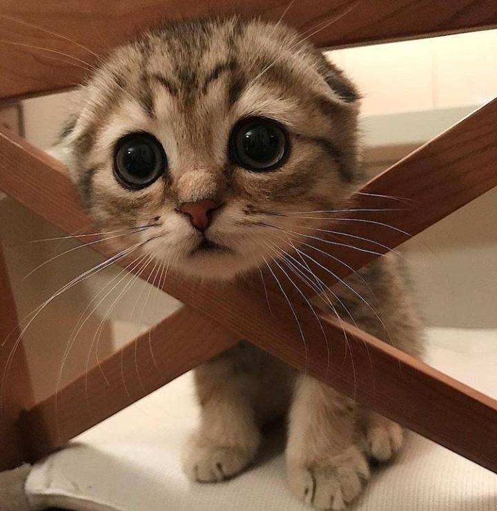 Eyes http://ift.tt/2EDGByU