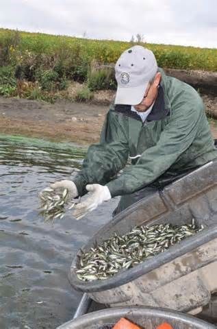 where to buy fish to stock a pond in missouri