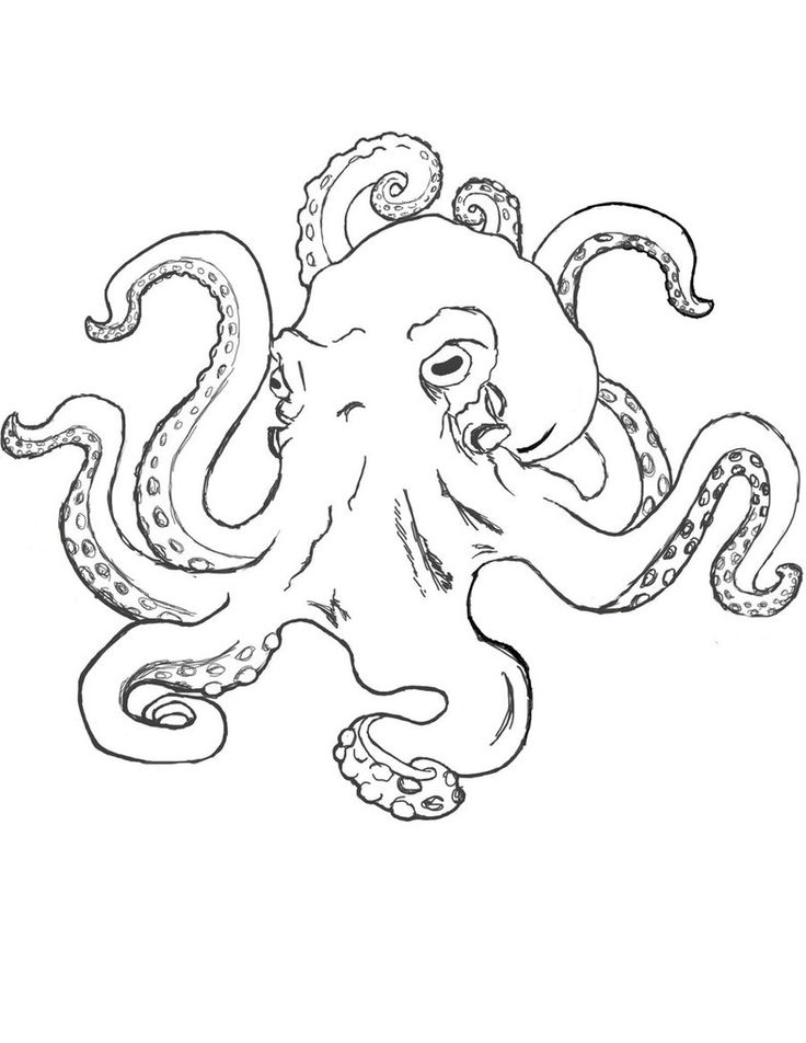 simple octopus sketch - Google Search