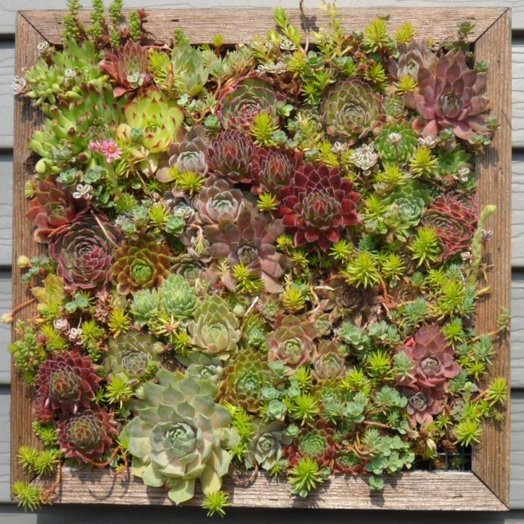Mosaic Succulent Living Wall Box Kit Gifts Pinterest Living Walls Succulent Wall And