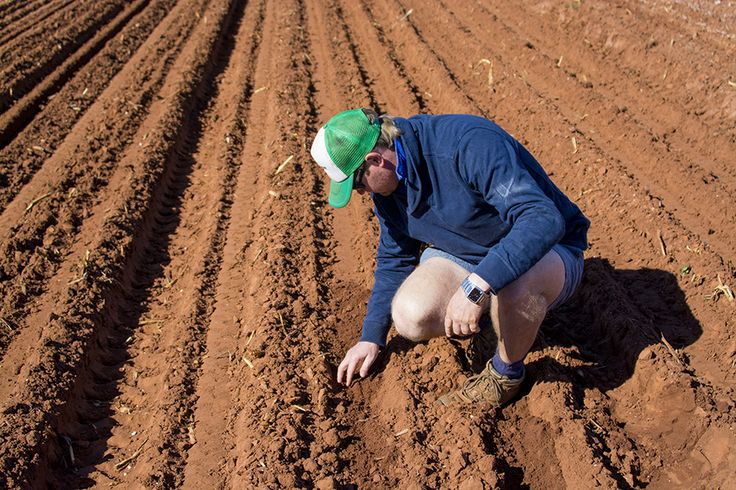 Farm manager Matt Howard checks the depth of the planting at Shelamar Station, Australia. Photography by Dan Wood.