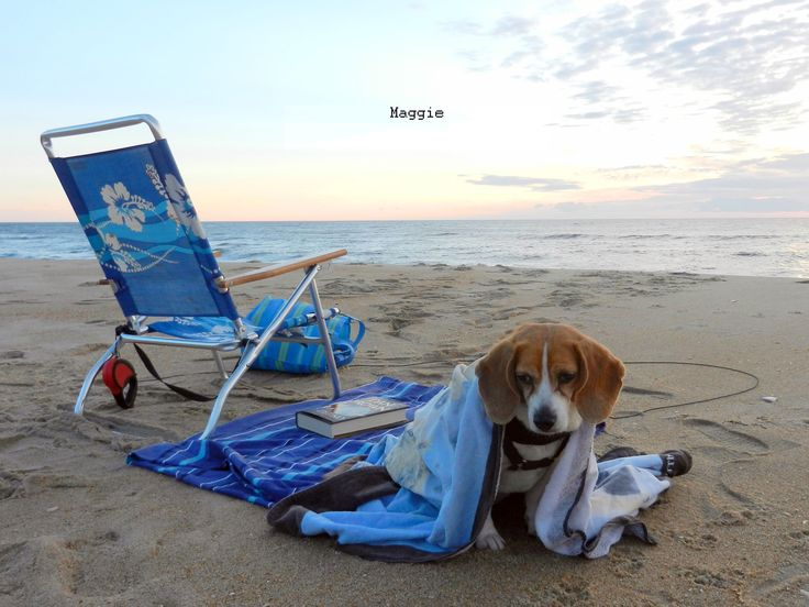 Maggie had a blast on the #OuterBanks! #obx #petfriendly