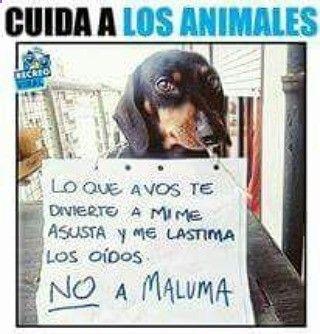 Si por favor dejen al asqueroso Maluma