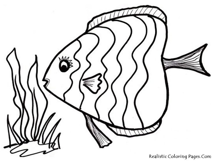 The 25+ best Fish coloring page ideas on Pinterest | Fish template ...