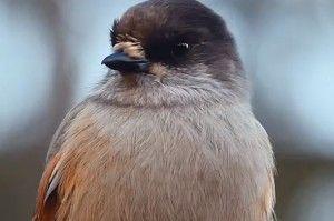 Videot | Suomen Luonto